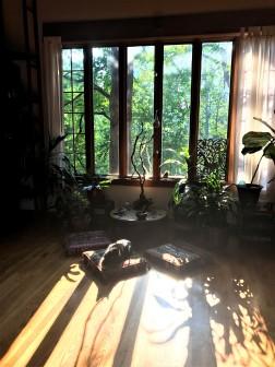 One of Sebastian's cat's sunning himself in the living room.