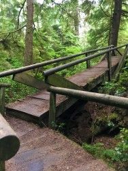 Loved all the cool, wooden bridges on this trail.