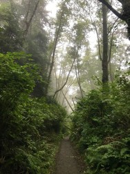 The fog was unreal, like a mystical fairyland.