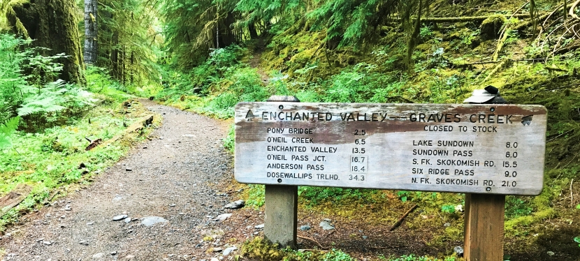Hiking to Enchanted Valley: Giant Trees and the LoneRanger